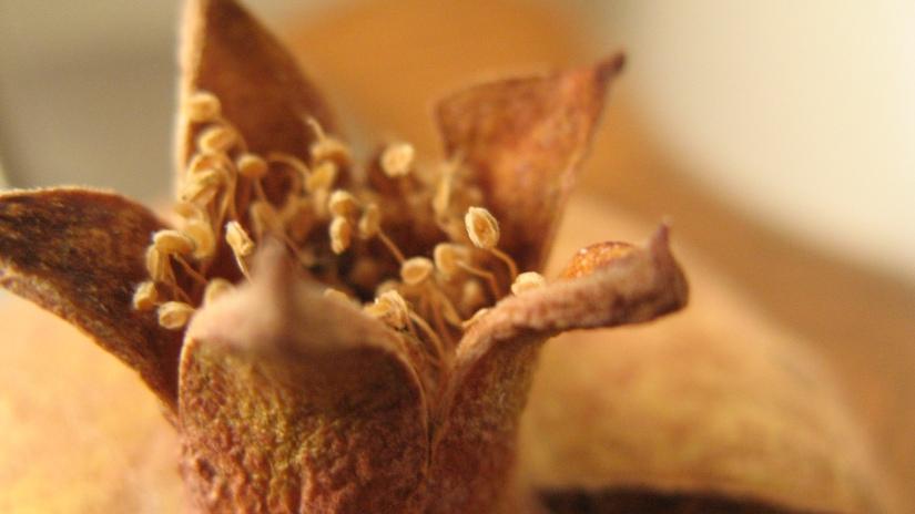 dried california pomegranate