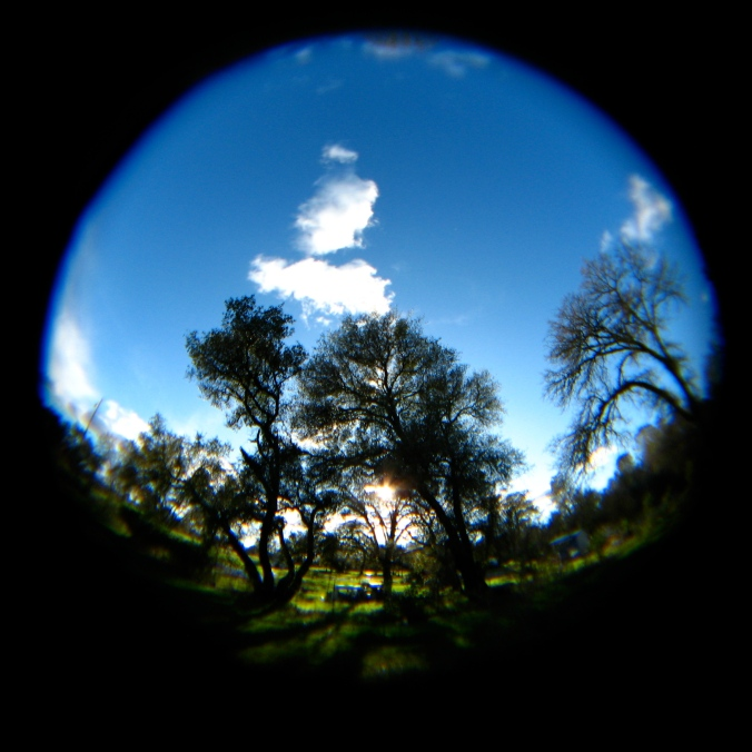 A round fisheye lens photo of a blue and green northern california  springtime outdoor landscape.