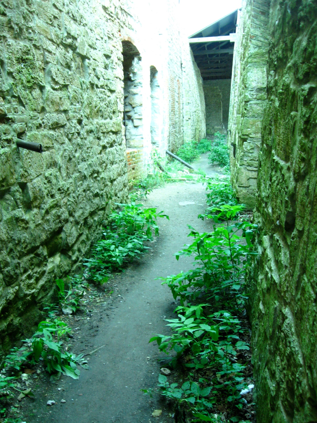 overgrown ruins, northern michigan, great lakes, trading post
