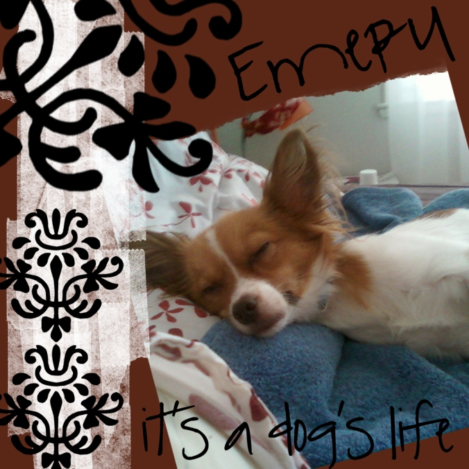 the August Break image of sleeping Emery the Papillon puppy dog on a rust-red and damask scrapbook