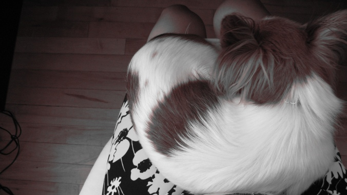 the August Break sepia and black and white image of a sleeping Papillon puppy dog on a lap near a wood floor