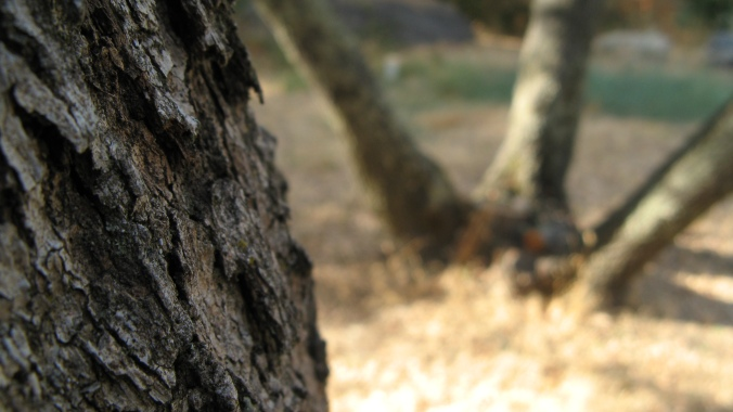 macro shot of bark on tree in a dry california backyard in september