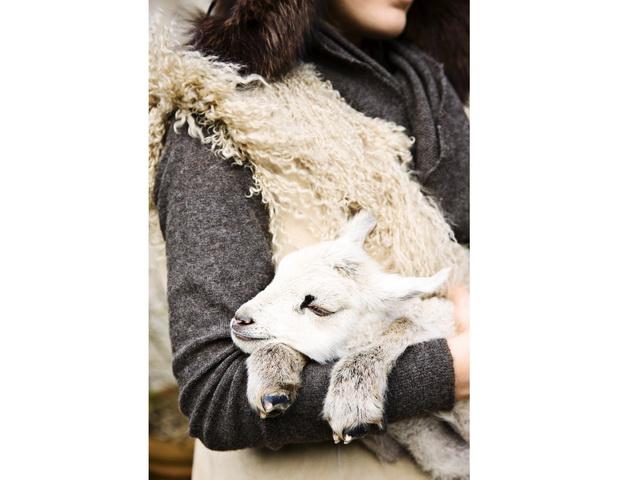 photography from danish photographer morten holtum http://www.holtum.dk/  - goat kid, grey textiles, sweater