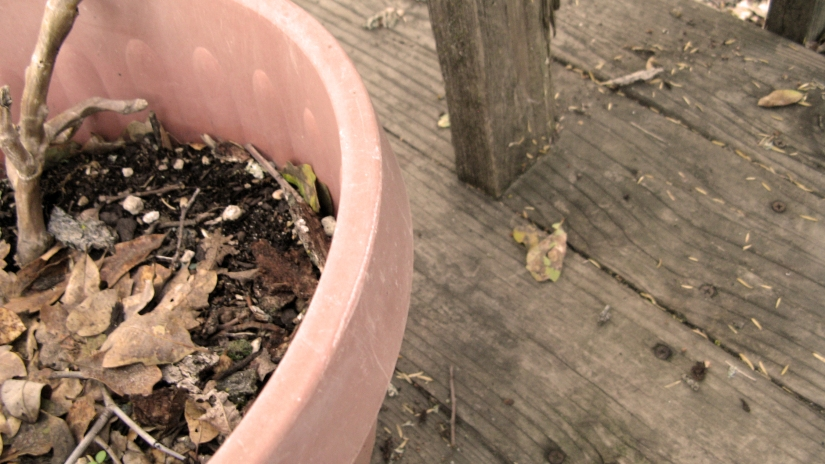 potted plant with fallen leaves on old wood patio