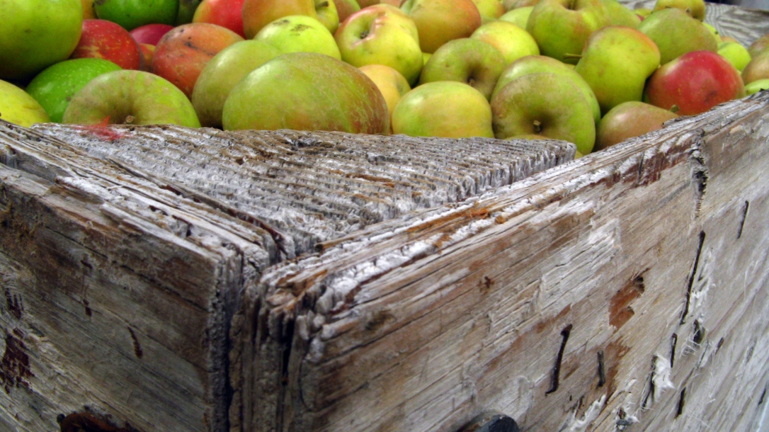 apples in crate at apple hill in camino, california