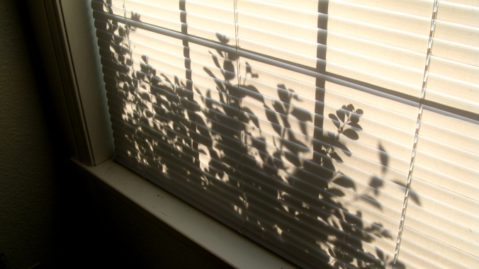 silhouette of leafy branch plants through closed window