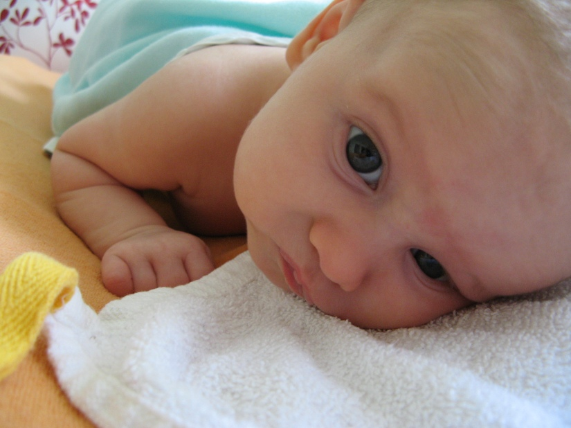 aveline alenka - nine and a half weeks old