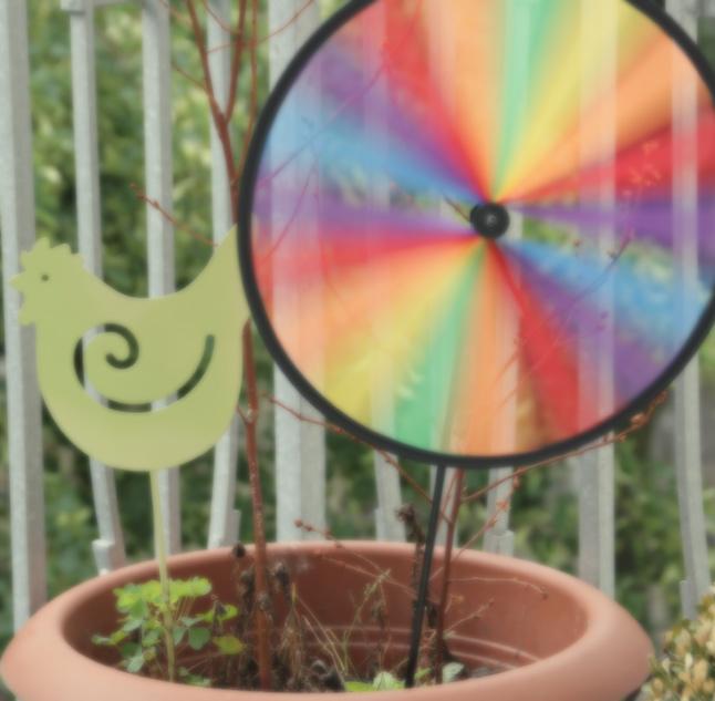 Artsy Ants - Sylvia - Photograph of Pinwheel in Garden Pot