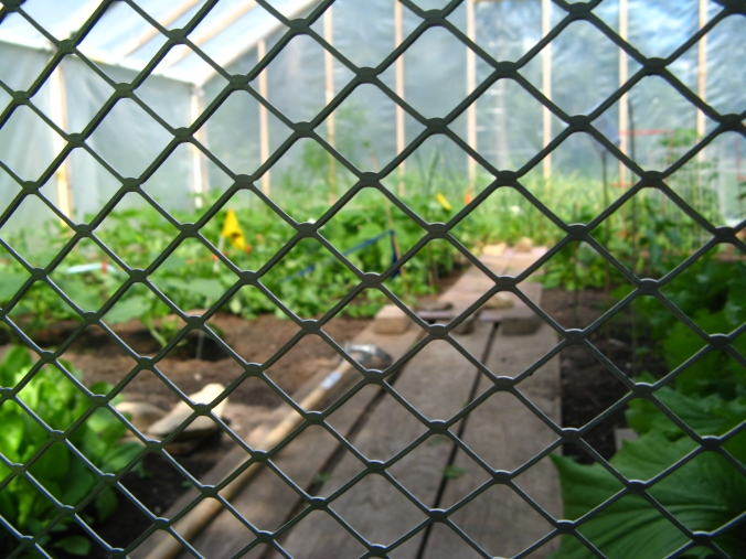 View through fencing into hot/house/greenhouse garden