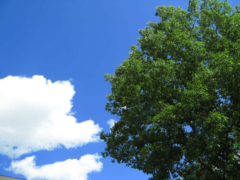 Very blue sky and green leafy tree