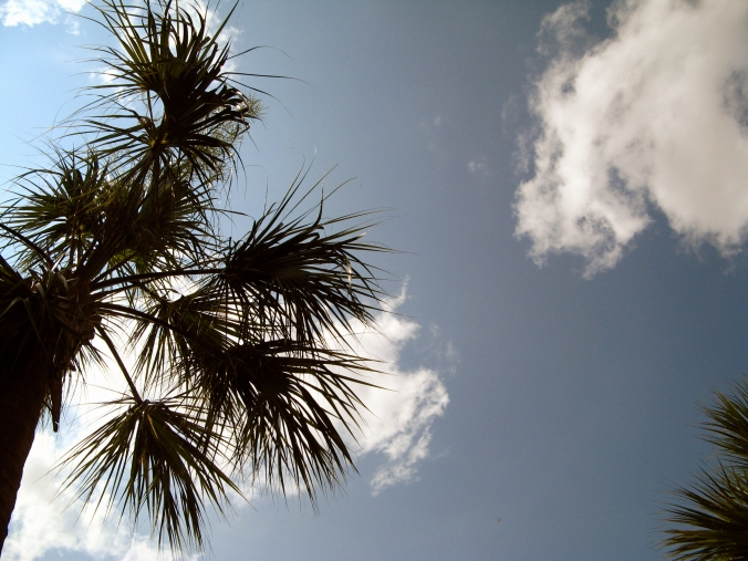 30 Day Photo Challenge - Day 4 - Clouds - Central Florida palm tree against the sky - Taken with a polarizing lens filter