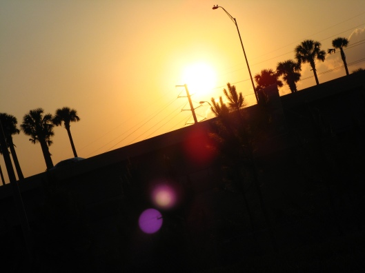 30 Day June Photo Challenge - Day 8 - Sunset - Florida palm trees and sun flare