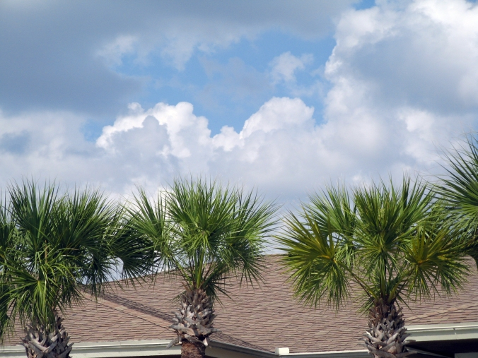 Florida palm trees, clouds and rooftops