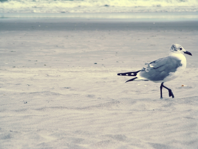 Sea Gull on sandy beach