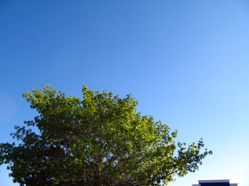 Day in Photos - Blue Sky