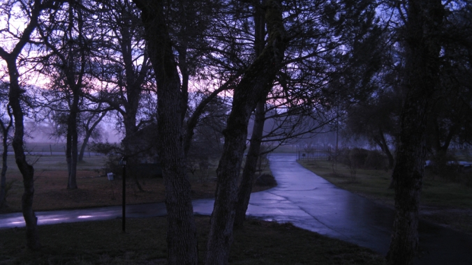 Favorite Places in Northern California -  Oak Trees and Foggy Sunrise
