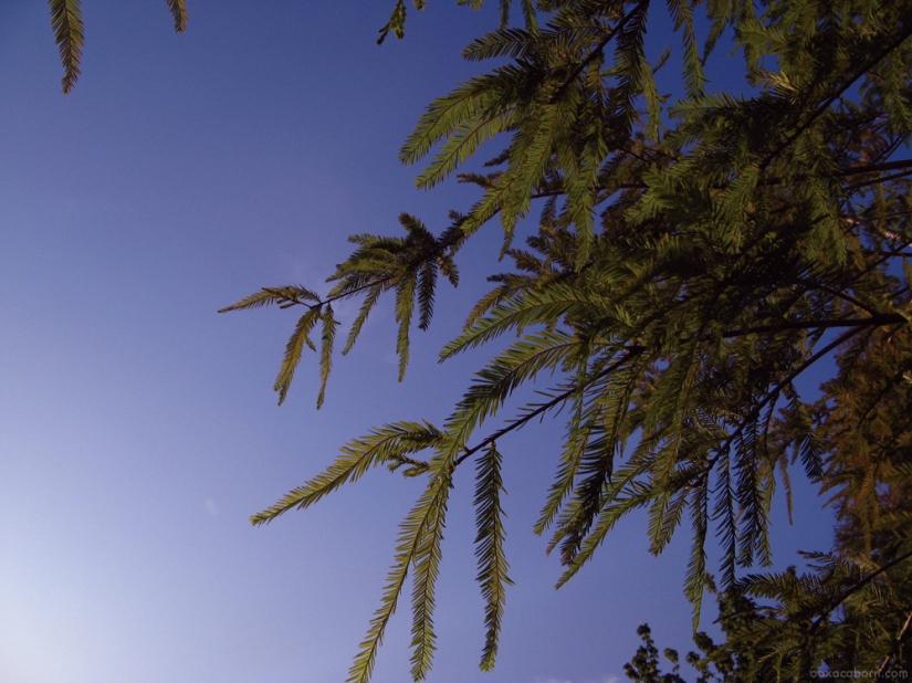 Southern Sky - Evergreen