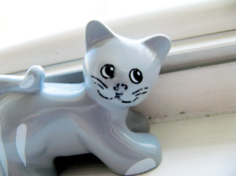 Duplo Cat - Gina Munsey, Oaxacaborn dot com