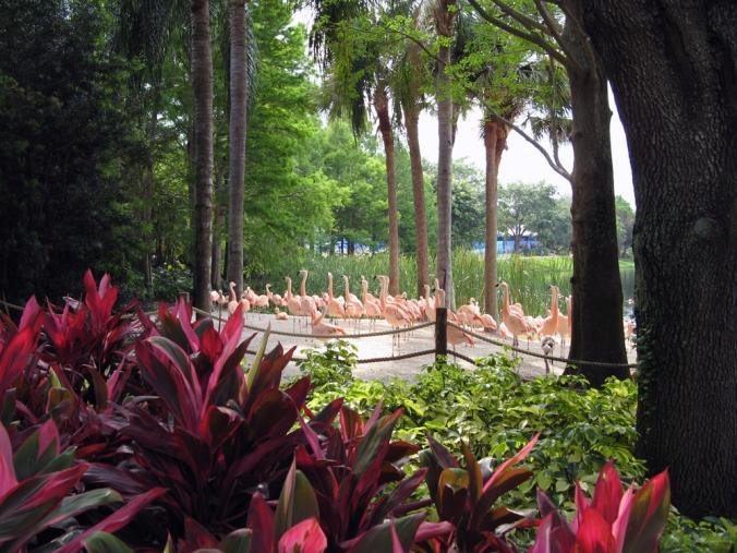 Flamingos in Florida via Oaxacaborn