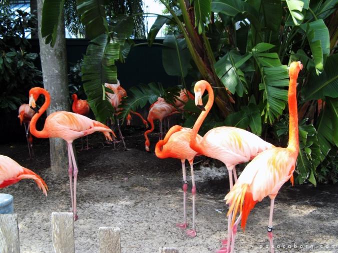 Group of Flamingos in Florida via Oaxacaborn