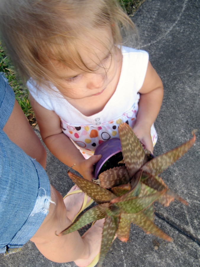 Toddler holding succulent via Oaxacaborn dot com
