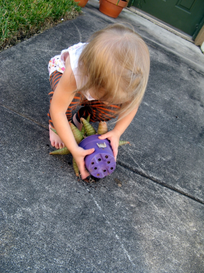 Toddler turning succulent over via Oaxacaborn dot com