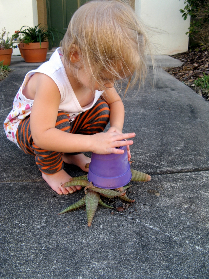 Toddler with upside-down succulent via Oaxacaborn dot com