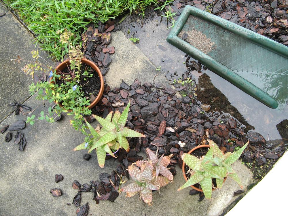 Front stoop after a Florida rain via Oaxacaborn