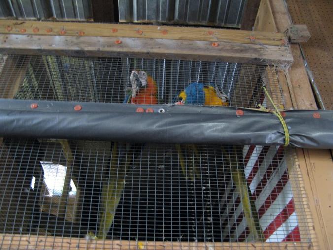 Parrots at a weird flea market