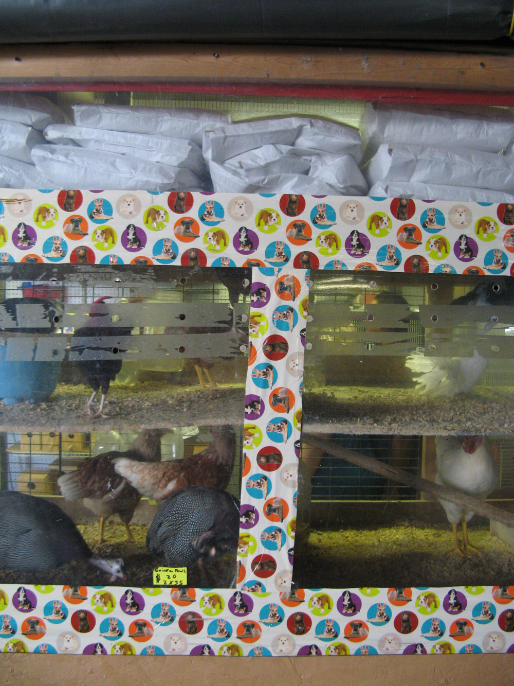 Weird pet shop inside a flea market