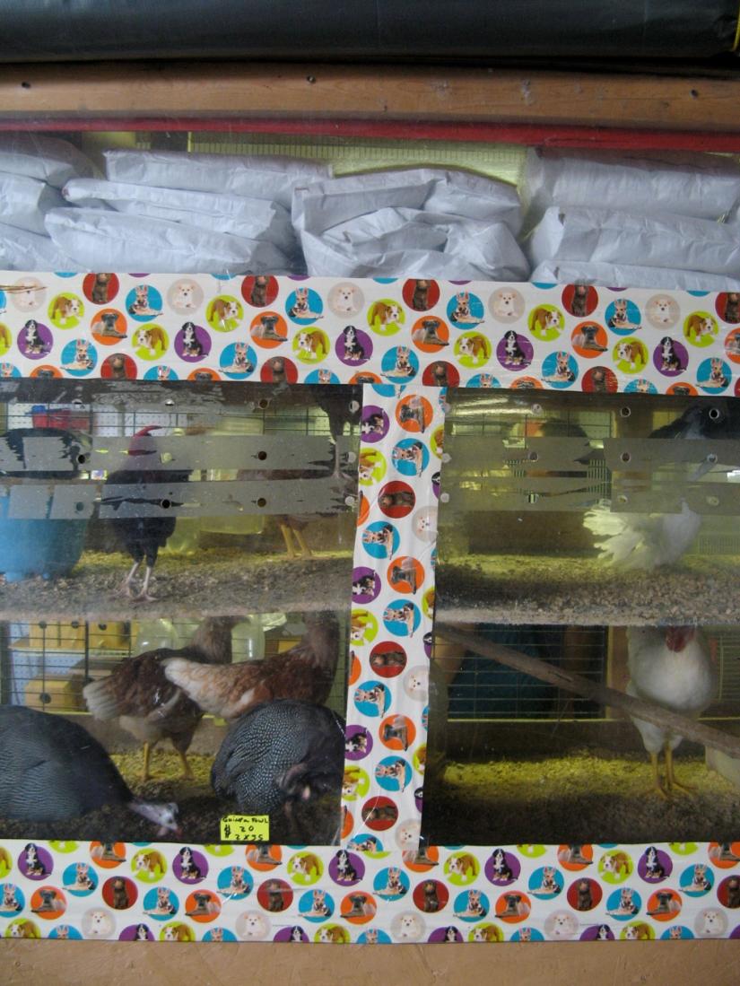 Weird pet shop inside a flea market