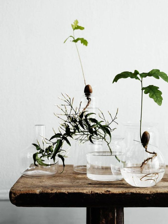 Greenery and sprouted things - Monday's Pretty Things - Inspiration from Oaxacaborn