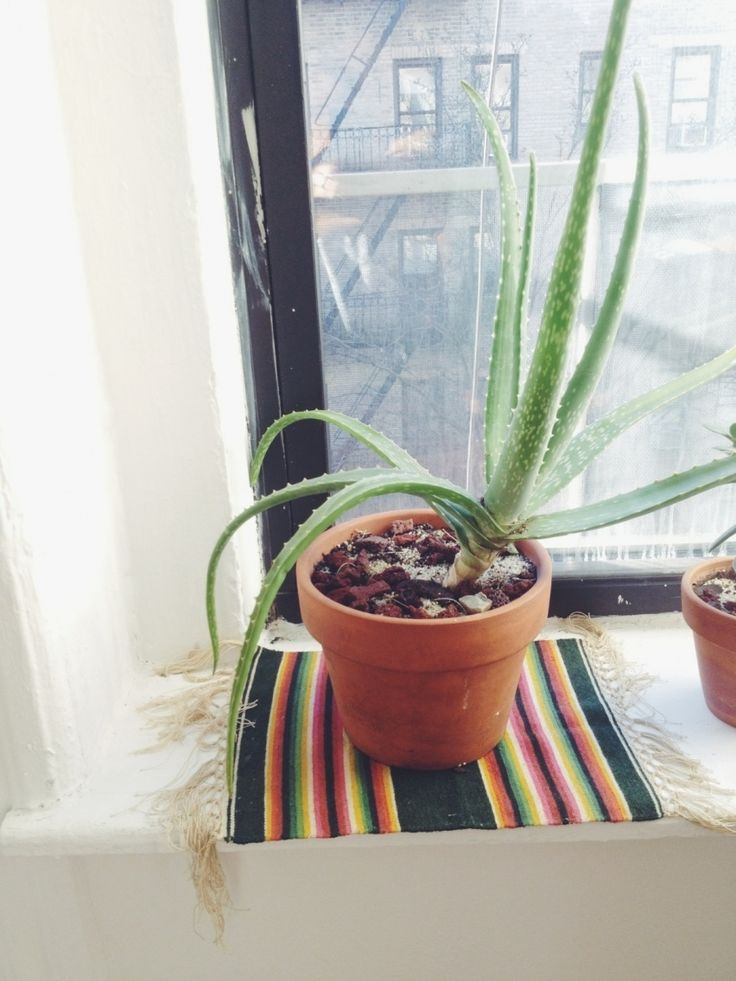 succulent in urban window with textile coaster - Rennes on VSCO as seen on Oaxacaborn's Monday's Pretty Things