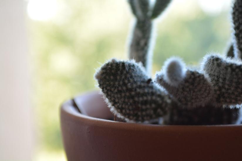 WEB_Cactus_SOTC