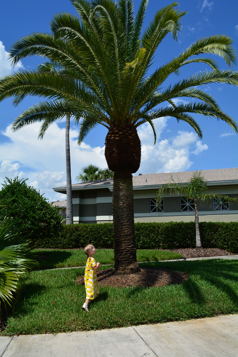 big old palm