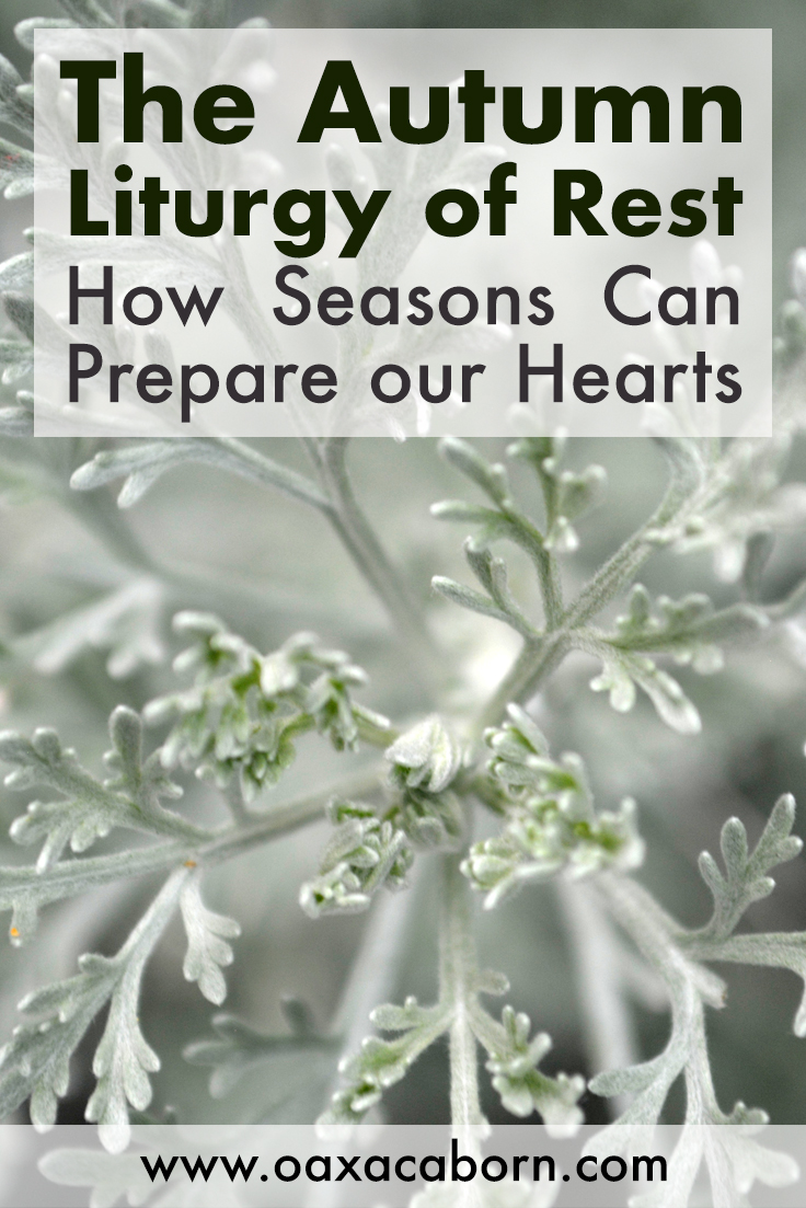 The Autumn Liturgy of Rest: How Seasons Can Prepare Our Hearts